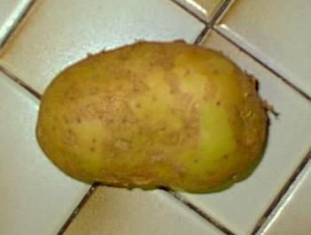 A... potato? For some reason?