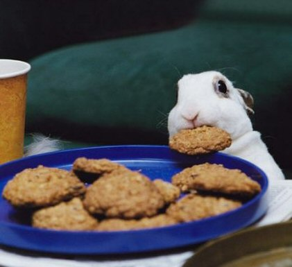 Rabbit v cookie